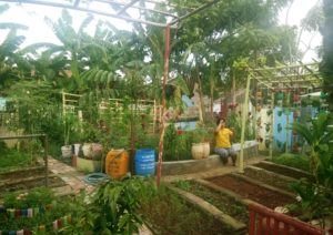 Urban farming in a kampung in Karawaci