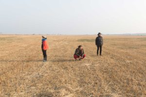 A wide, mown straw field on which three people are. All three are looking into the distance.